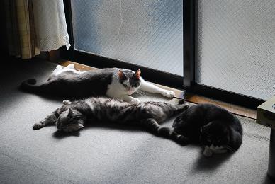 猫達もノビノビ。.JPG