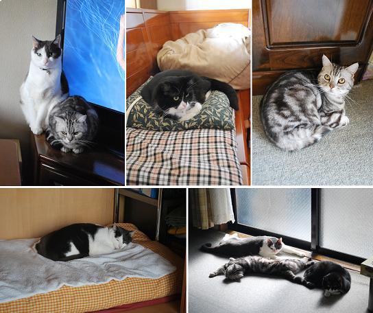 猫達も最初は避難してましたが….JPG