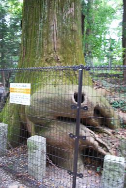 蛸杉と….JPG