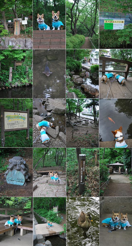 黒川清流公園。.JPG