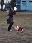 WINちゃん、ママさんの周りで….JPG