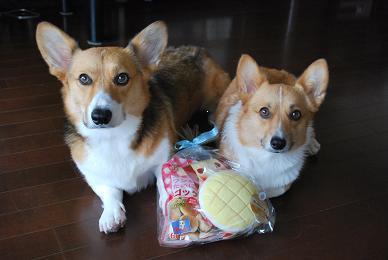WINちゃんママさん、ありがとう!!!.JPG